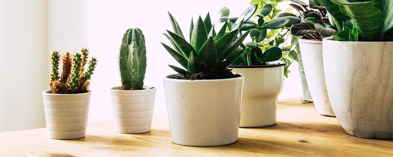 Plants s